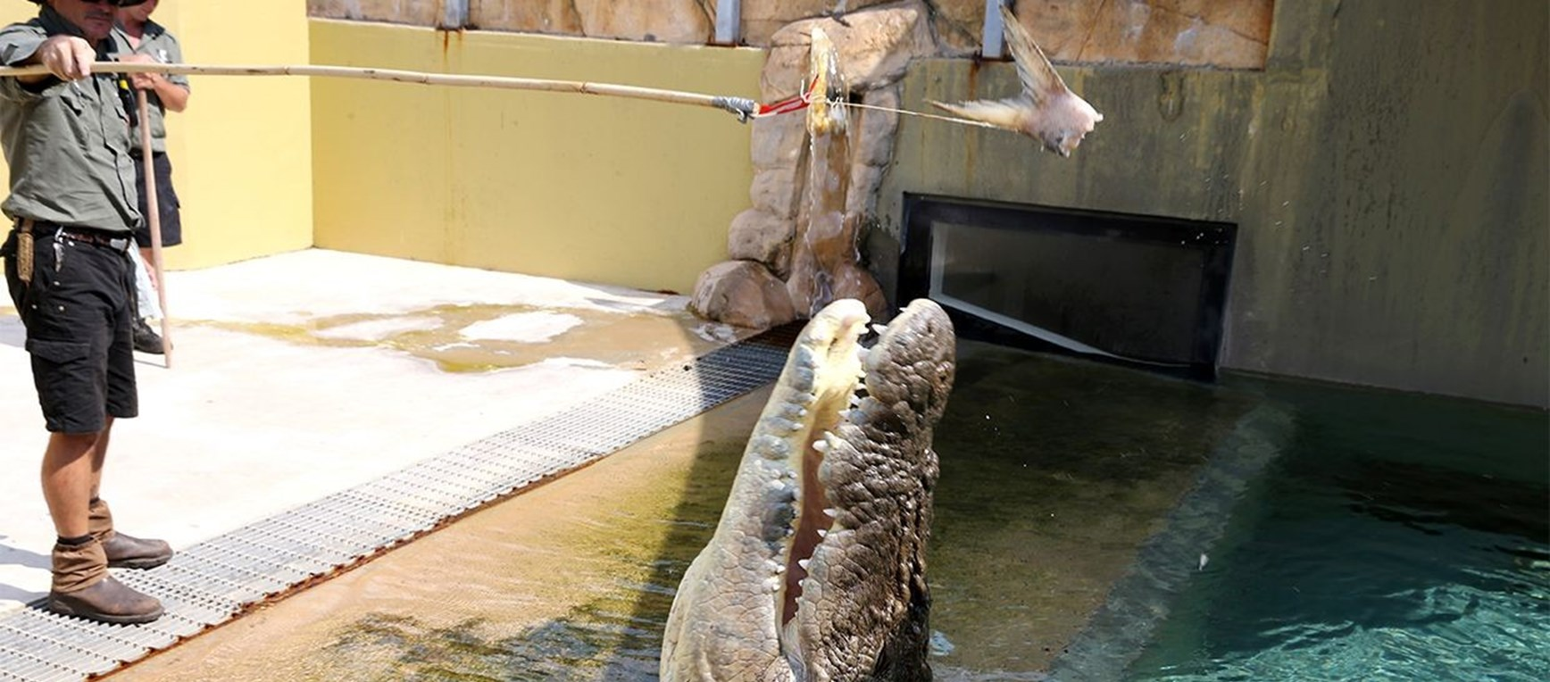 GALLERY | Feeding Crocs at Crocosaurus